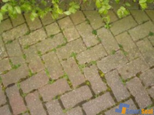 Block paving covered in algae